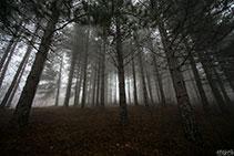 Tra i boschi di Varzi
